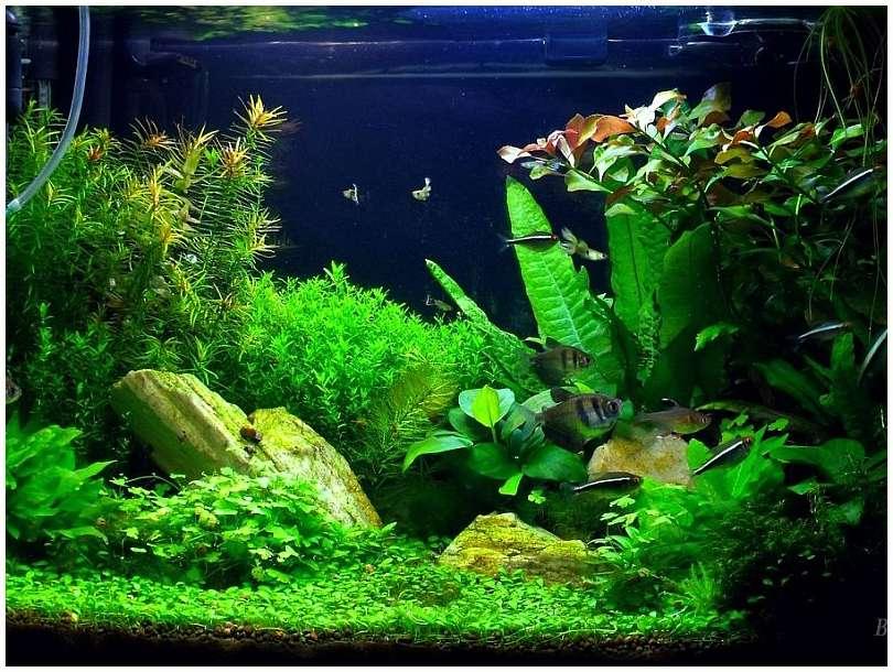 Acti substrate pro regular 5l fondo fertile substrato for Fondo acquario
