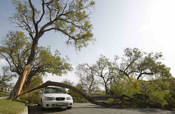 Hyundai Elantra Árvore Tree