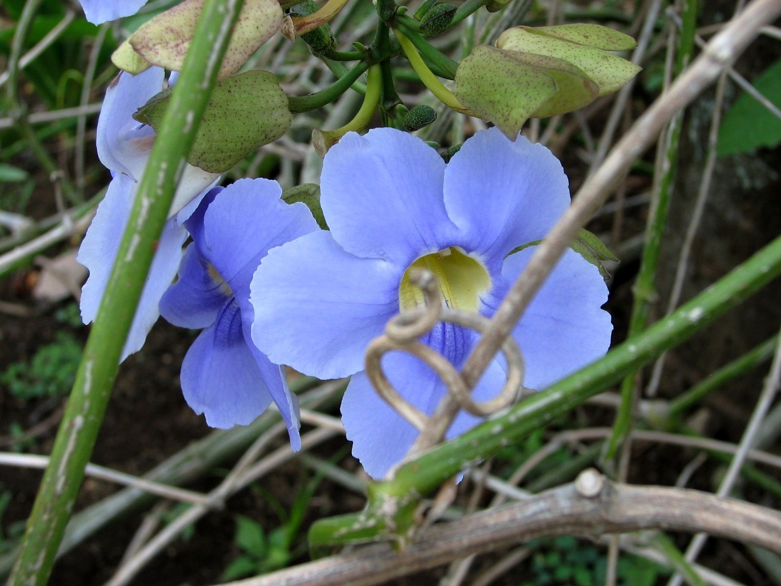 Spring flowers beauty of shapes and colors free spring blue flowers pictures izmirmasajfo