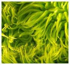 Green Rug Fabric